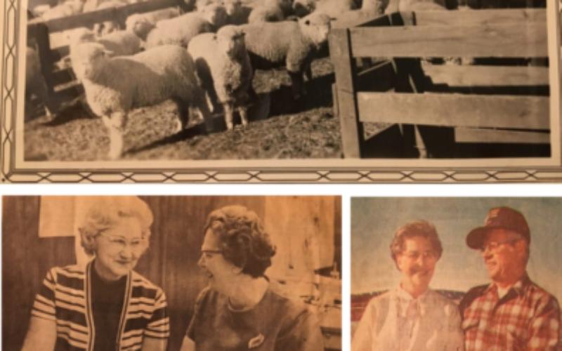 Looking Back on 40 Years of Yarn